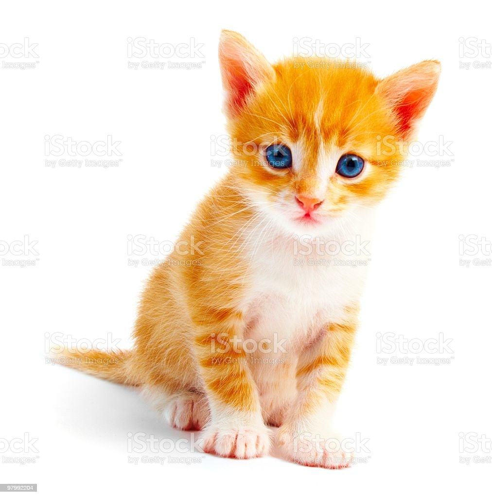 A small ginger kitten on its own royalty-free stock photo