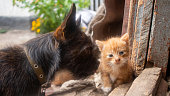 istock Small ginger kitten with a small black dog. Selective focus 1281680694