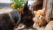istock Small ginger kitten with a small black dog. Selective focus 1282336191