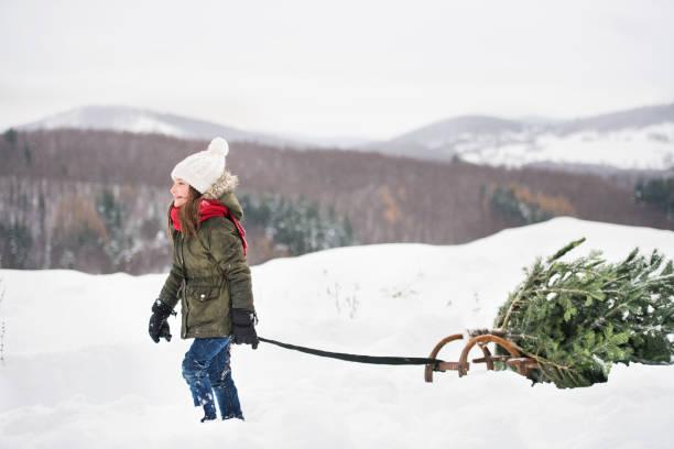 ein kleines mädchen ziehen einen weihnachtsbaum im wald. - alte weihnachtsbäume stock-fotos und bilder