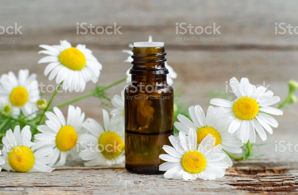 Small glass bottle with essential roman chamomile oil on the old wooden background. Chamomile flowers, close up. Aromatherapy, spa and herbal medicine ingredients. Copy space. - Zbiór zdjęć royalty-free (Ajurweda)