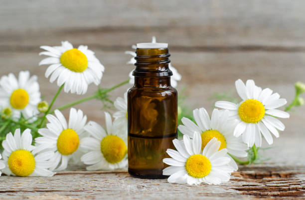 small glass bottle with essential roman chamomile oil on the old wooden background. chamomile flowers, close up. aromatherapy, spa and herbal medicine ingredients. copy space. - herbata rumiankowa zdjęcia i obrazy z banku zdjęć