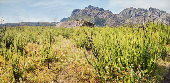 istock Small grass and bushes - mostly endemic - growing in front of Andringitra massif rocks 1254788406