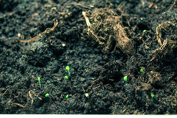 Small grass grows from the earth stock photo