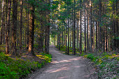 Small gravel road through summer forest in Sweden