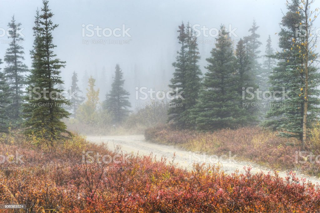A small gravel road winds around Blueberry Bushes and fog covered trees in Denali National Park. stock photo