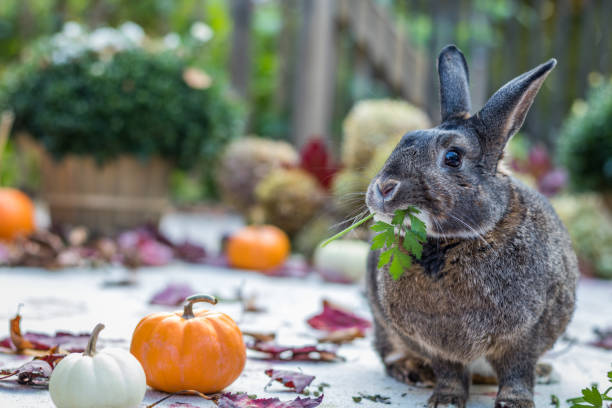 Small gray and white rabbit eating parsley surrounded by colorful picture id1181603403?b=1&k=6&m=1181603403&s=612x612&w=0&h=0ycr prrcbvgfk2poqzqe3evqqr2v vnqnxmpuf9bea=