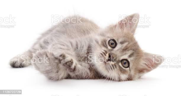 Small gray kitten picture id1125722729?b=1&k=6&m=1125722729&s=612x612&h=6n lvhgqyzswbqmmc7grwgbk6q6enbzs11xtrj hjqq=
