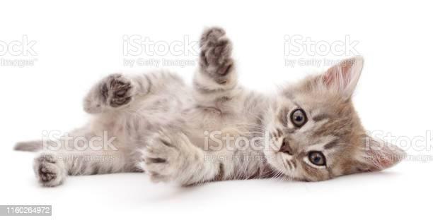 Small gray kitten picture id1160264972?b=1&k=6&m=1160264972&s=612x612&h=ryzz0qdkfdapz2veg73koupnzdhtfnjsei0qb fhyzs=