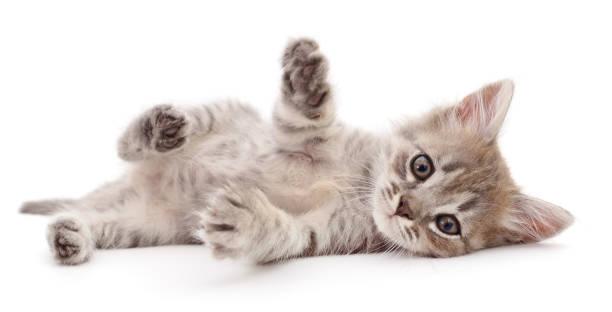 Small gray kitten picture id1160264972?b=1&k=6&m=1160264972&s=612x612&w=0&h=uky39nufvdg3kckbfgjx4ytqbcwcqj9vgpgdbudpk5u=