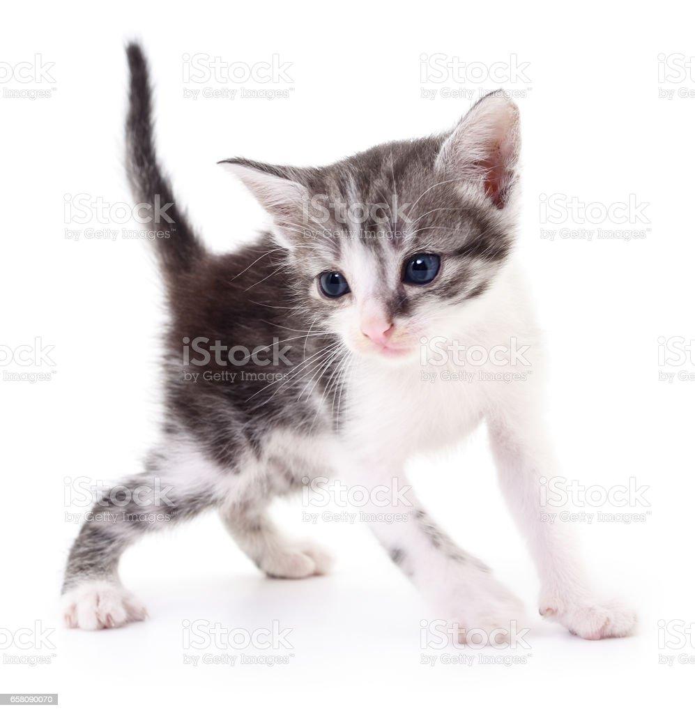 Small gray kitten. royalty-free stock photo