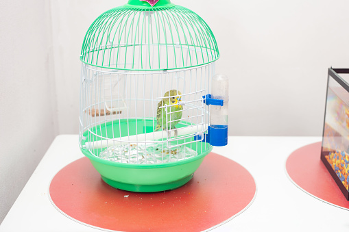 A small green cage with a green wavy parrot in the room.