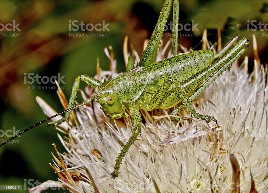 Small green grasshopper. stock photo