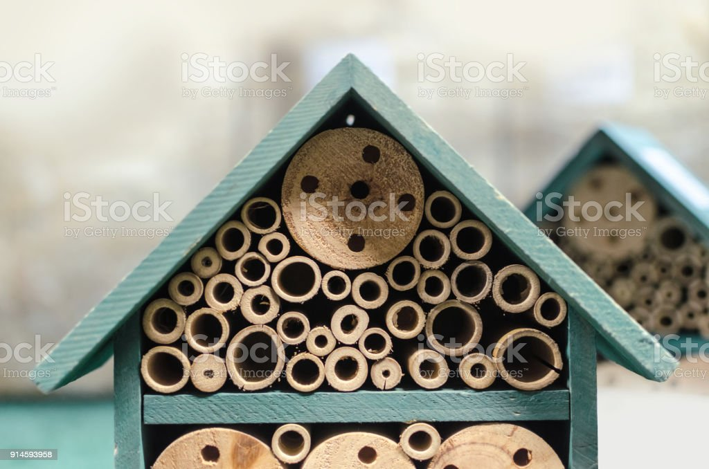 small green house for insects stock photo