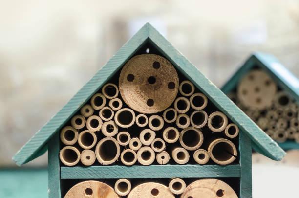 pequena casa verde para insetos - foto de acervo