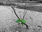 Small green leaves macro on dead plant desert land soil botany