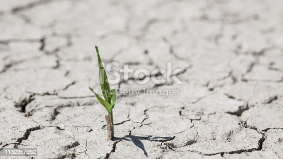 Germinating mall green plant in dry cracked soil. No people are seen in frame. Shot under daylight with a full frame DSLR camera and a macro lens.