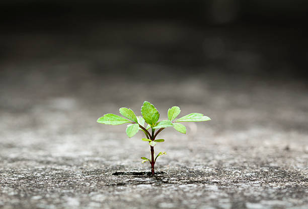 small green plant growing from crack in concrete - endurance stock pictures, royalty-free photos & images