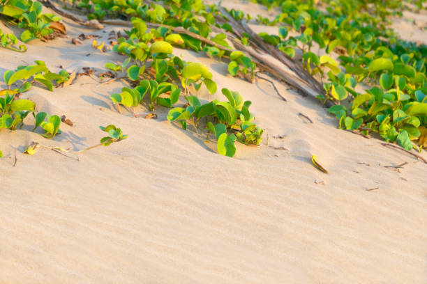 Small green plant leaves on sandy beach stock photo