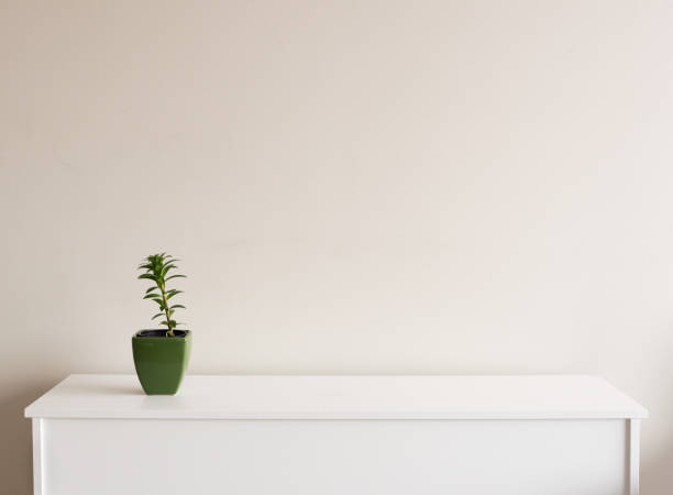 Small green plant on sideboard stock photo