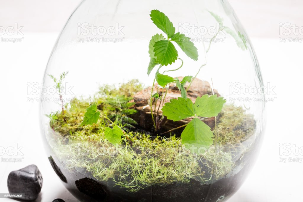 Small green plants in a jar with self ecosystem royalty free stockfoto
