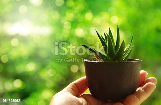 small green cactus tree in woman hand with blur morning summer garden nature background