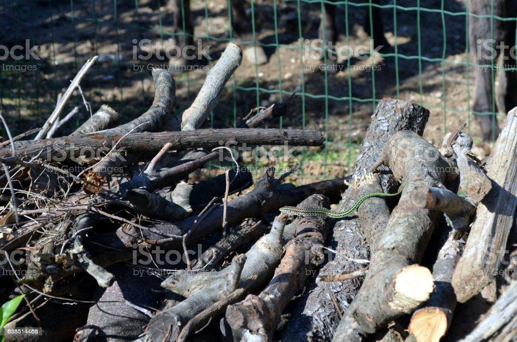 Small Green Vine Snake stock photo