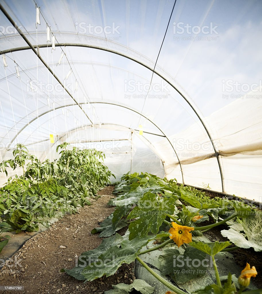 Small Greenhouse royalty-free stock photo