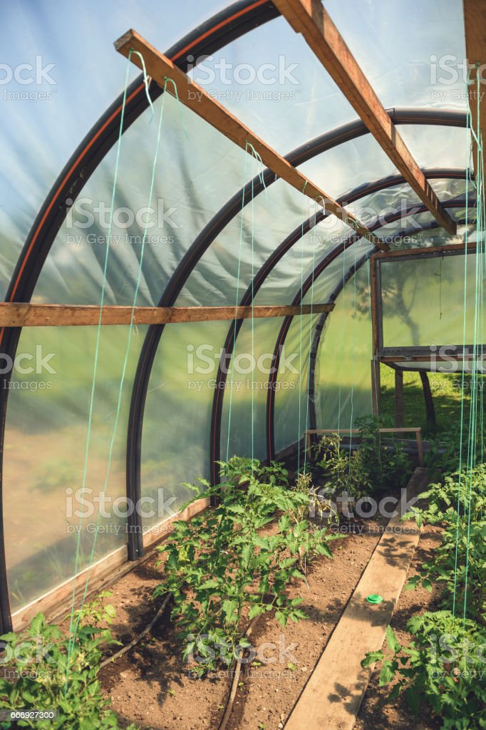 Groovy Small Greenhouse With Tomatoe Plants Stock Photo Download Image Now Home Interior And Landscaping Oversignezvosmurscom