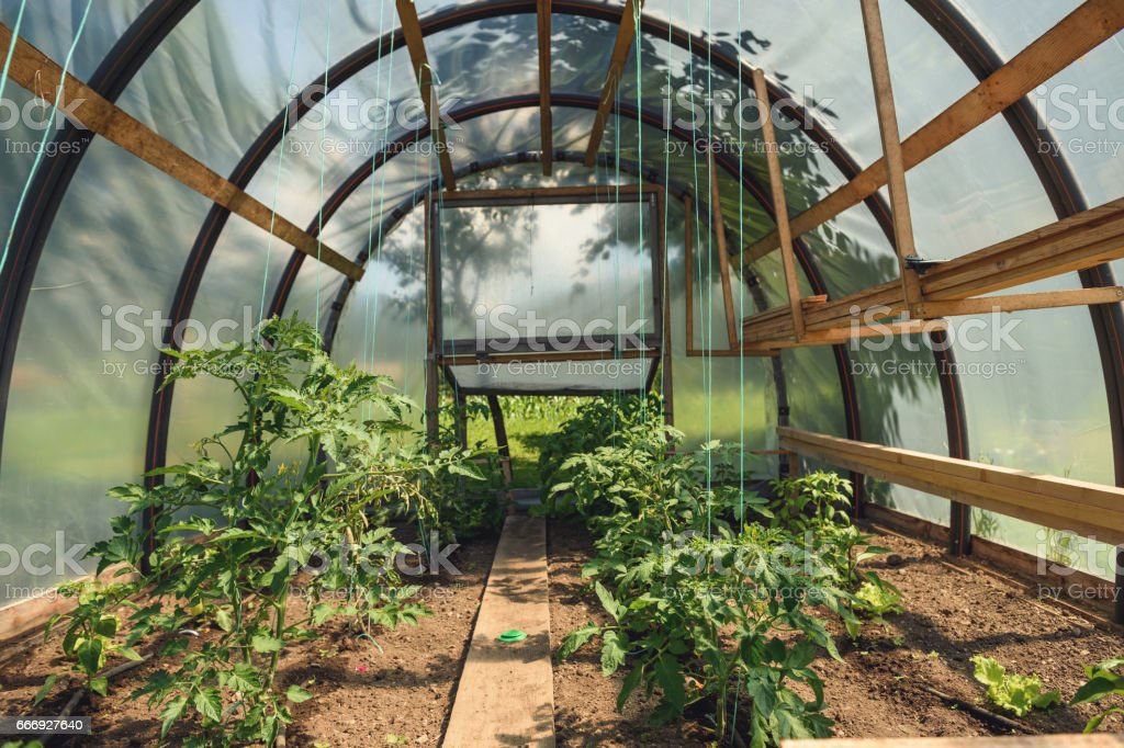 Groovy Small Greenhouse With Tomatoe Plants Stock Photo Download Home Interior And Landscaping Oversignezvosmurscom