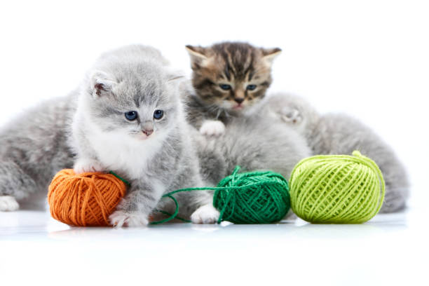 Small grey fluffy adorable kitten is playing with orange yarn ball picture id914835478?b=1&k=6&m=914835478&s=612x612&w=0&h=v05pxszt2cgmree ptbjnjxgun5o cvhlu1pwc4qbrw=