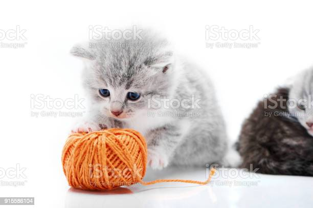 Small grey fluffy adorable kitten is playing with orange yarn ball picture id915586104?b=1&k=6&m=915586104&s=612x612&h=jdwnd9wxn9hisu9fvzprx2lr090sowtzz5ovs8dgqrk=