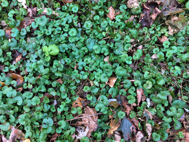 IMG_1335 Small ground plants and tree leaves in autumn stock photo