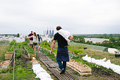 small group do gardening on an urban garden