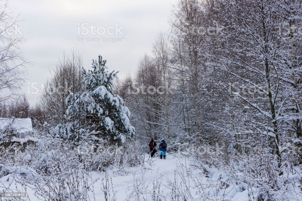 A small group of tourists goes through the snow-covered forest on a winter day. стоковое фото