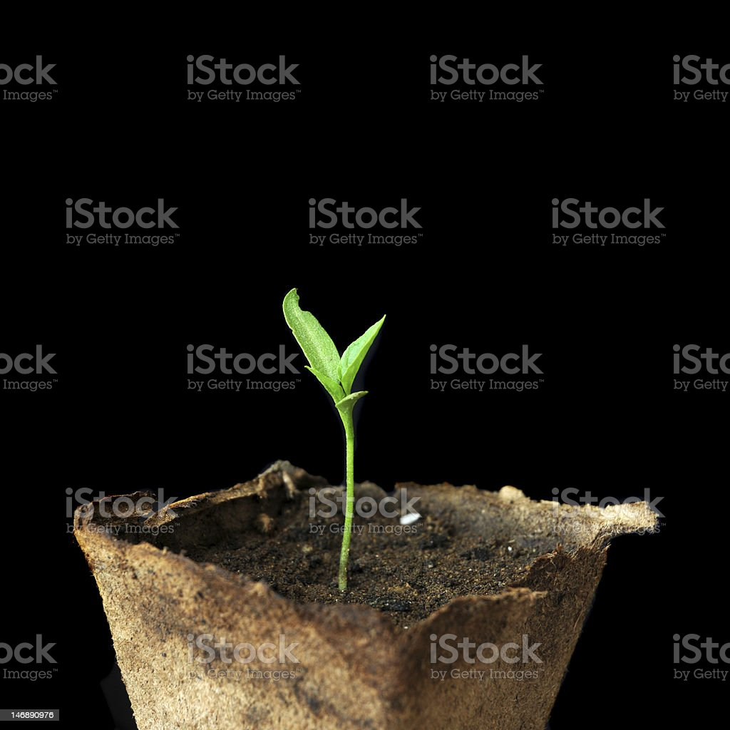 Small growing plant in pot stock photo
