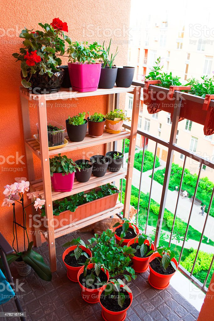 Small herb and flower garden built on small balcony garden stock photo