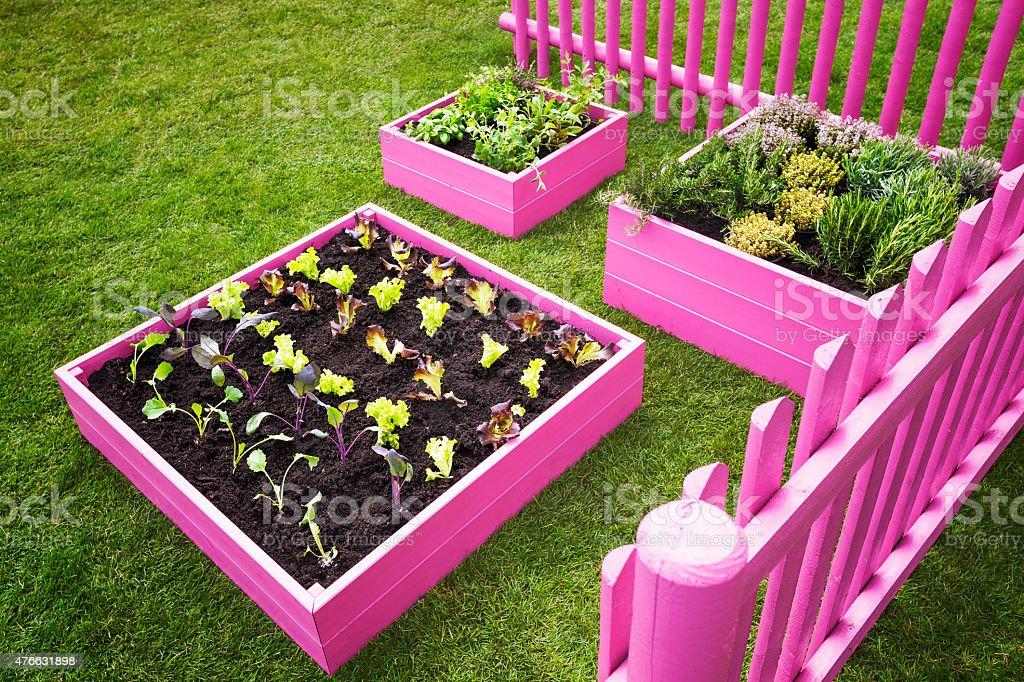 Small herb garden stock photo