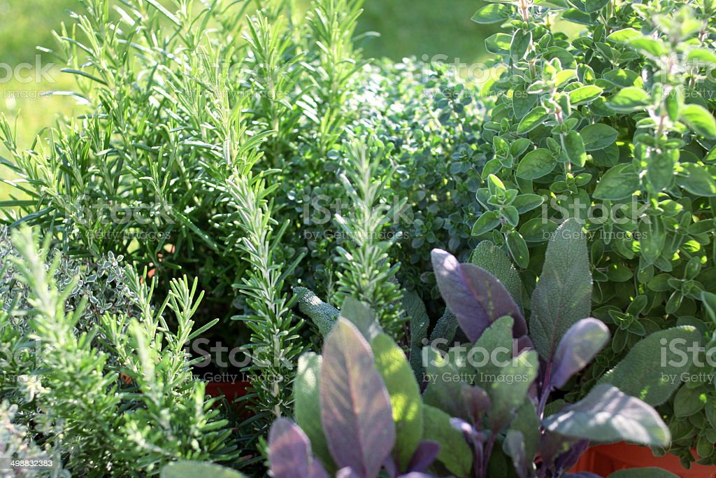 Small herb garden stock photo