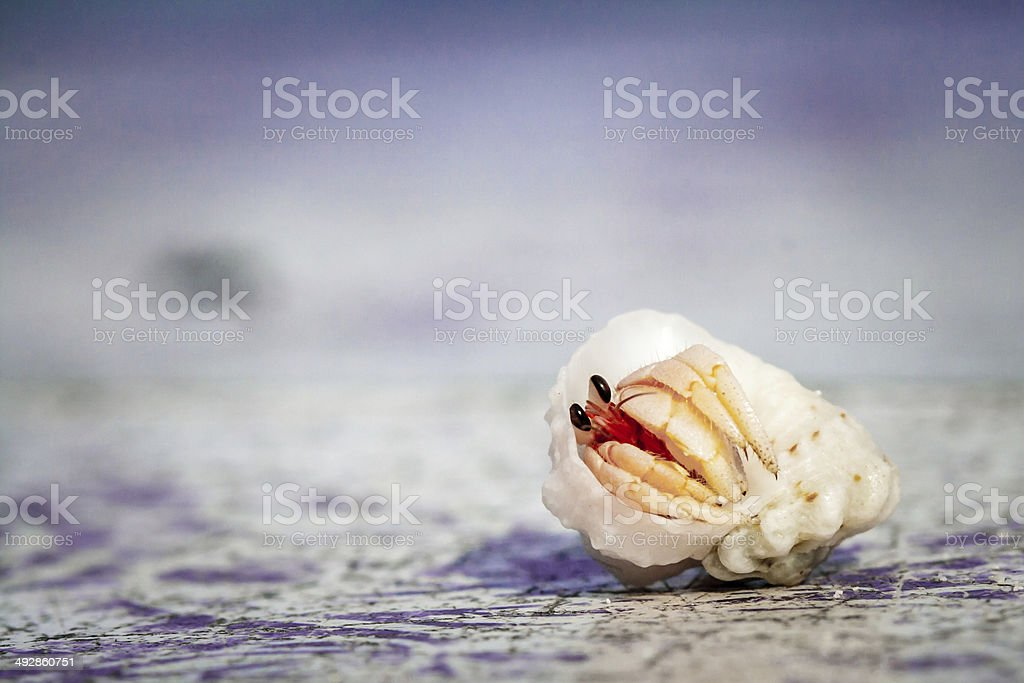 Small Hermit Crab of Cinnamon Island, Maldives royalty-free stock photo