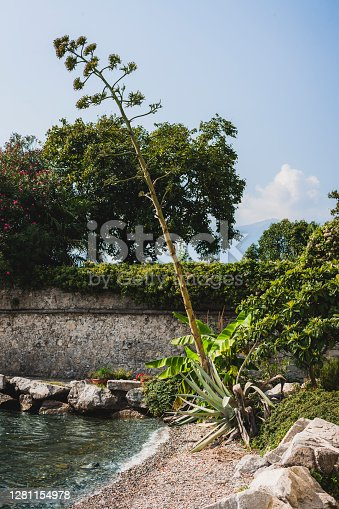Detail of a stone wall and mediterranean plants by the water.