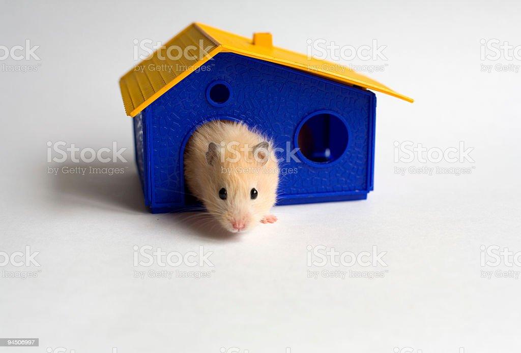 Kleine homeowner – Foto