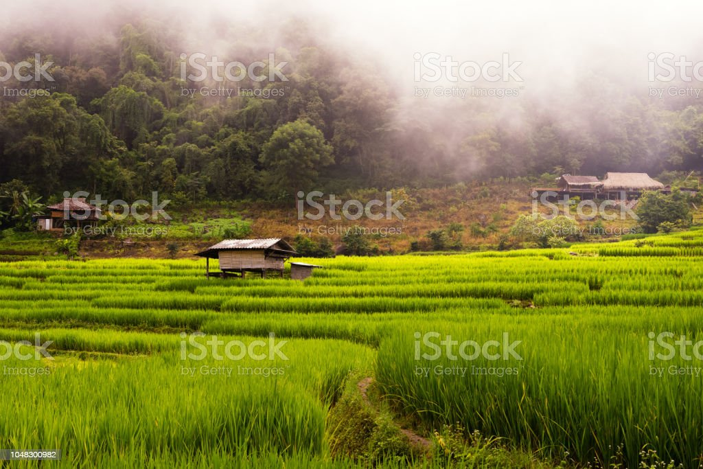 Small house and rice terraces field at pabongpaing village rice...