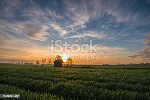 Small wooden hut in the middle of a wheat field at sunrise.