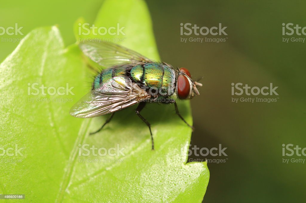 Small Insect and bug stock photo