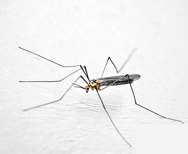 Small Insect Crawling On White Background stock photo