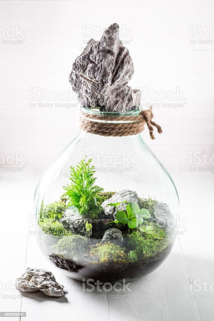Small jar with live forest on white table royalty-free stock photo