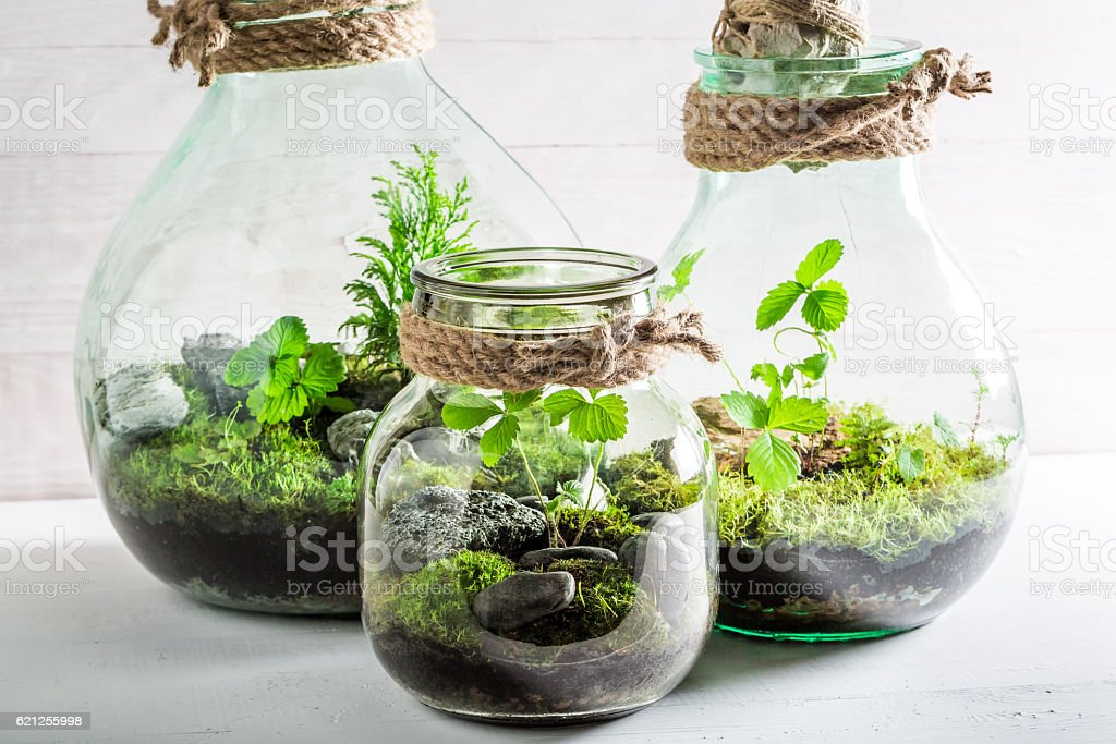 Small jar with live forest, save the earth concept stock photo
