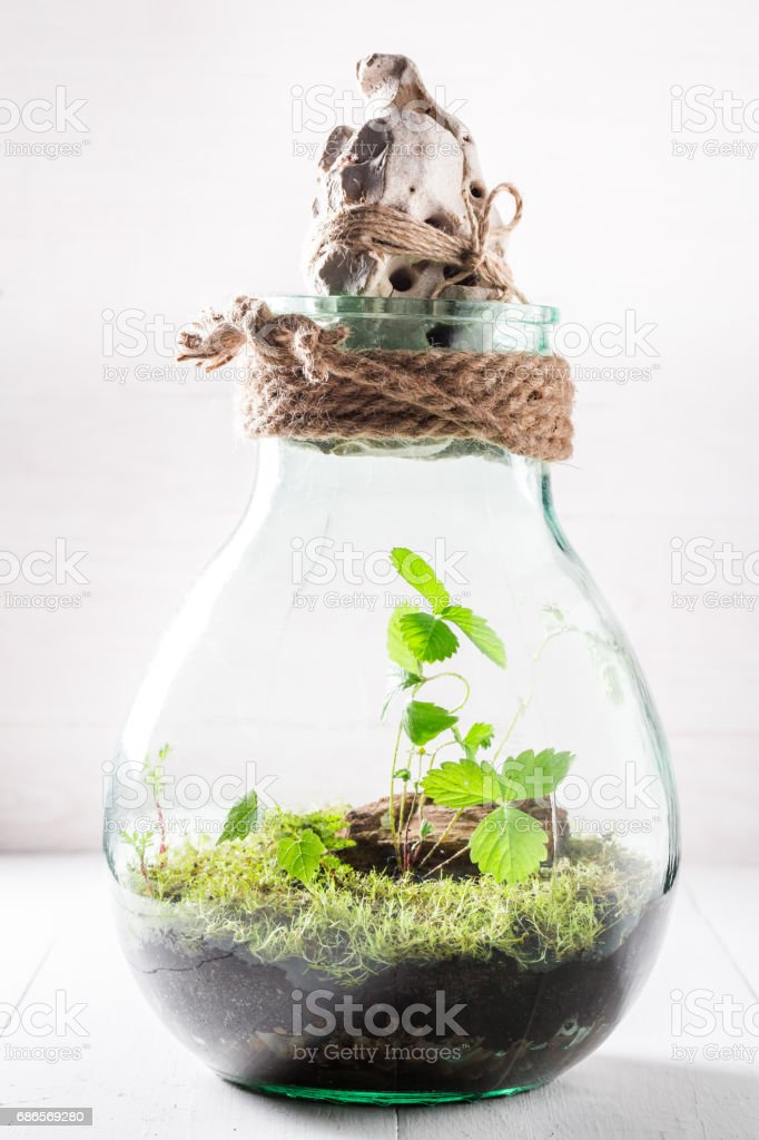 Small jar with piece of forest and moss royalty-free stock photo