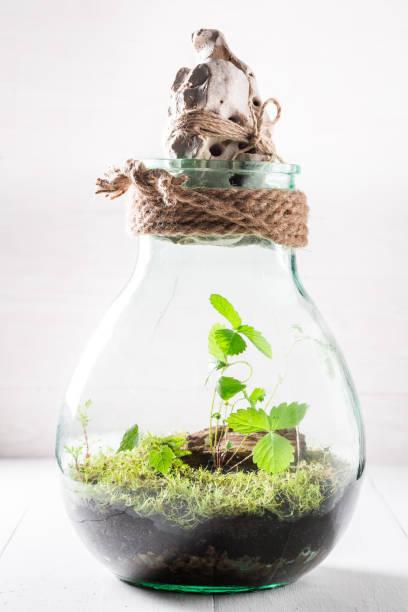 kleines glas mit stück wald und moos - terrarienpflanzen stock-fotos und bilder